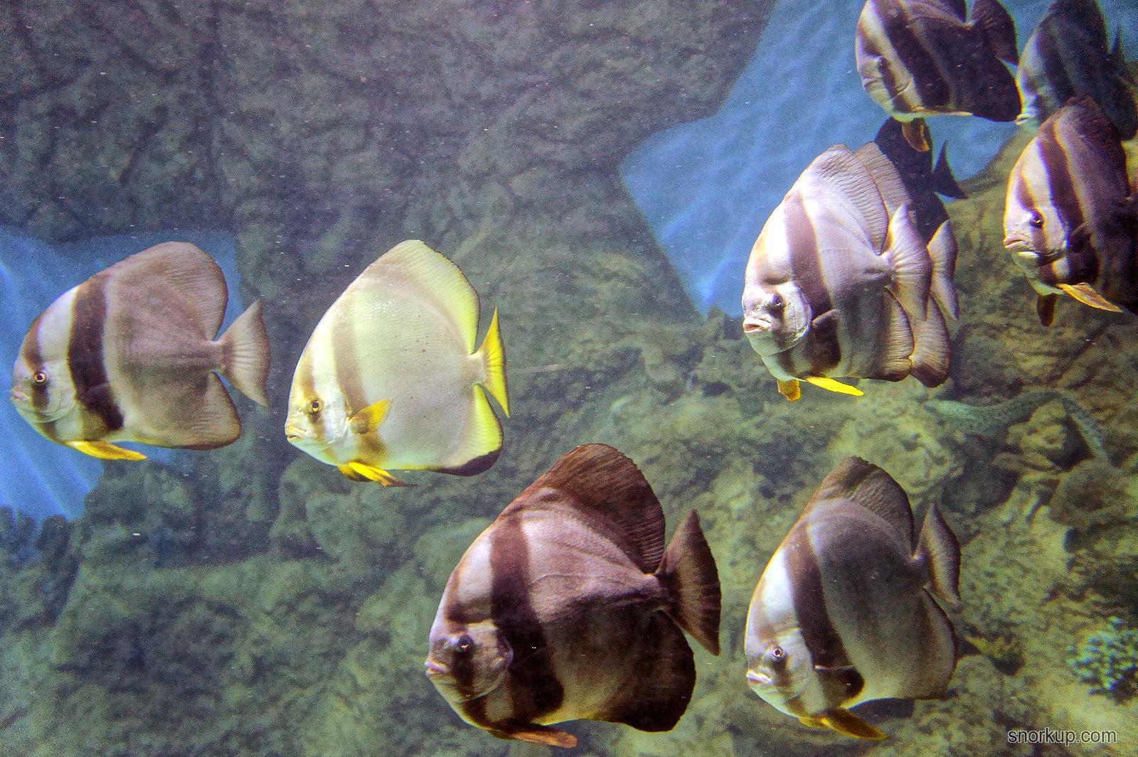 Океанариум в рио тропический позитив