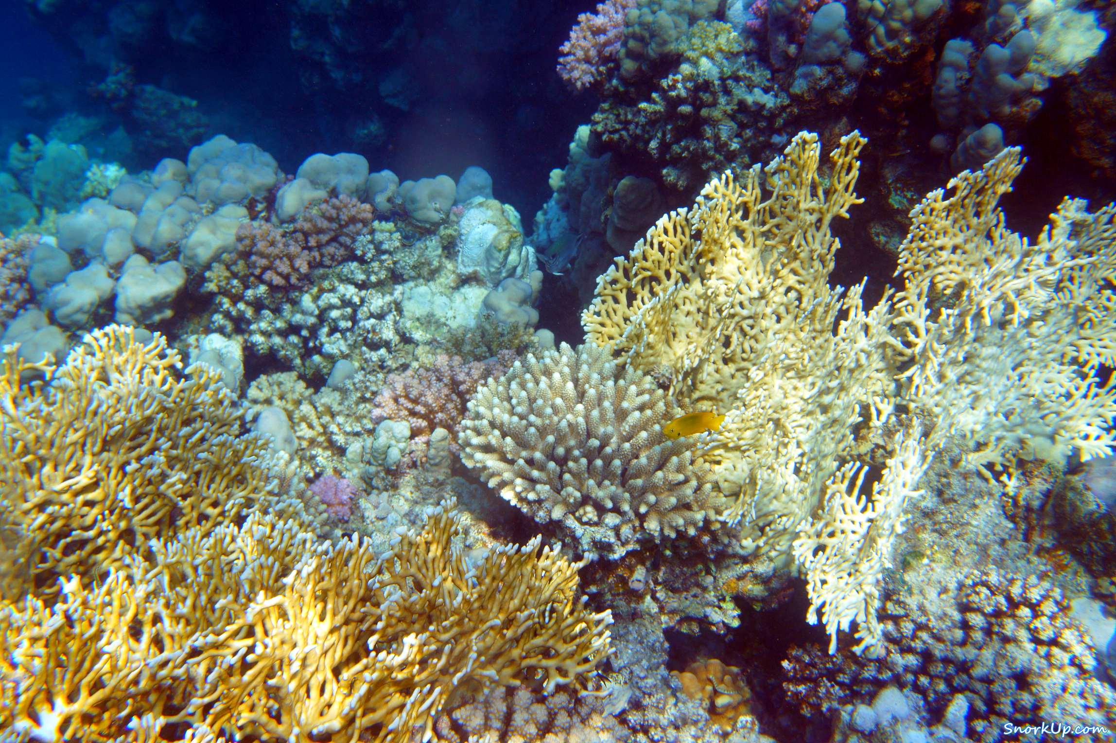 Рифы Zerib Kebir