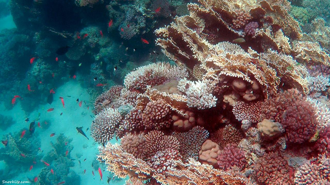 Рифы Mangrove Bay