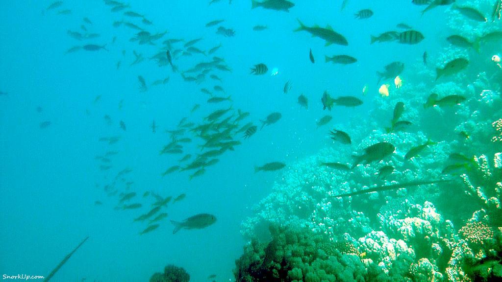 Под днищем корабля всегда собирается куча рыб