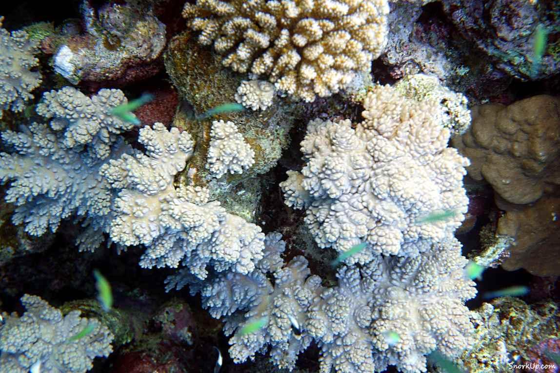 Мягкие кораллы - cнорклинг в Shams Alam.