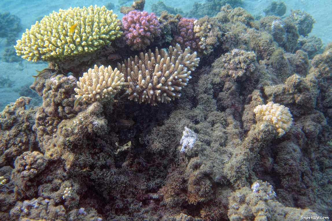 Полумёртвый риф - cнорклинг в Shams Alam.