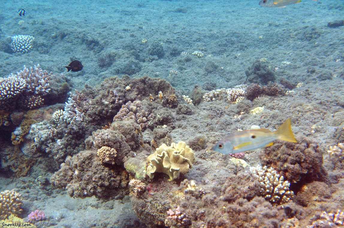 Мелководные области больше пострадали от высоких температур (?)