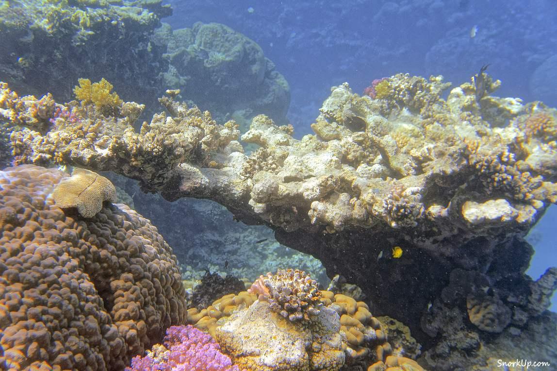 Здесь и до следующего комментария: пейзажи рифового ущелья - снорклинг в Марса Алам