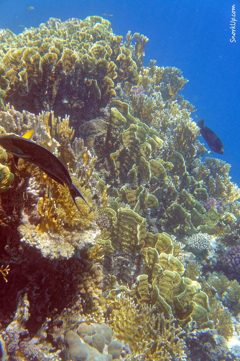Подводные пейзажи внешнего рифа - от ущелья и на север к Gorgonia Beach Resort