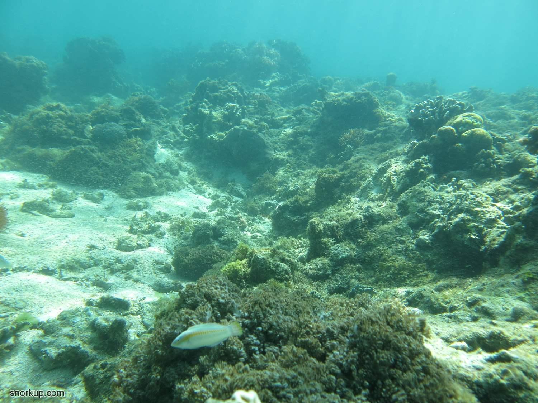 Типичные подводные виды этого места