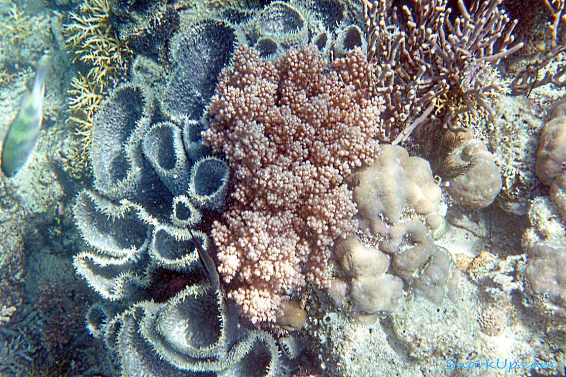 Серая трубчатая морская губка Callyspongia vaginalis (вроде они в Карибском бассейне водятся ?)